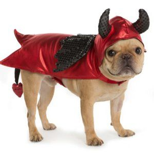 Dog Halloween Costume - Devil - Thrills and Chills - Medium